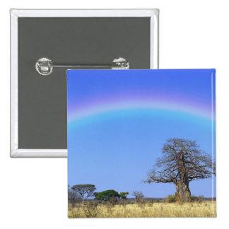 Arco iris y árbol africano del baobab, Adansonia Pins