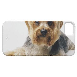 Arcos del rojo del terrier de Yorkshire que llevan iPhone 5 Case-Mate Fundas