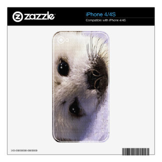 Arctic Baby Harp Seal Face - Wildlife iPhone 4S Decal