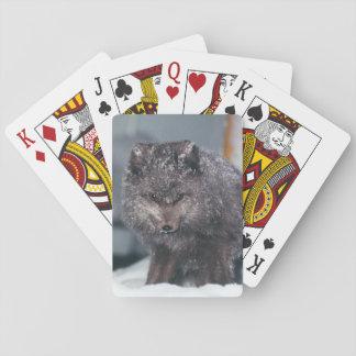 Arctic Blue Phase Fox Alaska Winter Scene Cards