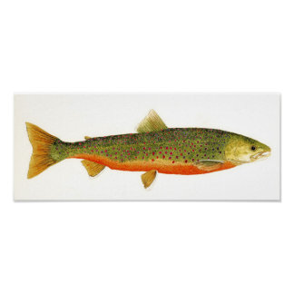 Arctic Char in Spawning Colors Poster