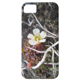 Arctic flower iPhone SE/5/5s case