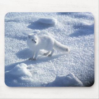 Arctic fox Alopex lagopus) An arctic fox, in 2 Mouse Pad