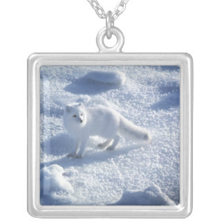Arctic fox Alopex lagopus) An arctic fox, in 2 Silver Plated Necklace