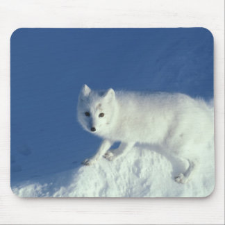 Arctic fox Alopex lagopus) An arctic fox, in Mouse Pad