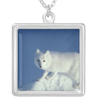 Arctic fox Alopex lagopus) An arctic fox, in Silver Plated Necklace
