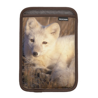 arctic fox, Alopex lagopus, coat changing from 2 iPad Mini Sleeve