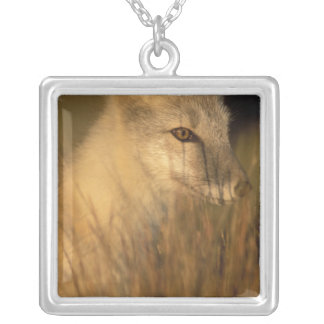arctic fox, Alopex lagopus, coat changing from 2 Silver Plated Necklace