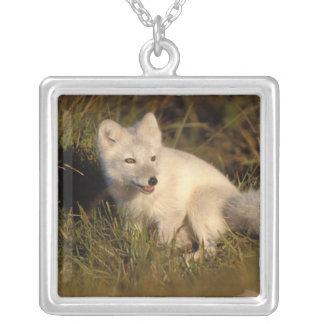 arctic fox, Alopex lagopus, coat changing from 3 Silver Plated Necklace