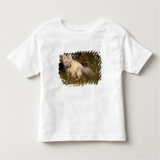 arctic fox, Alopex lagopus, coat changing from 3 Toddler T-shirt