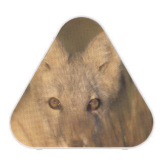 arctic fox, Alopex lagopus, on the 1002 coastal 2 Bluetooth Speaker