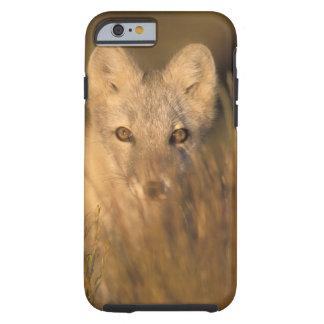 arctic fox, Alopex lagopus, on the 1002 coastal 2 iPhone 6 Case