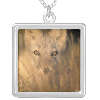 arctic fox, Alopex lagopus, on the 1002 coastal 2 Silver Plated Necklace
