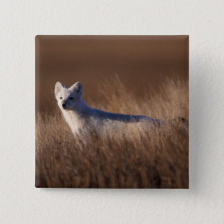 arctic fox, Alopex lagopus, on the 1002 coastal Pinback Button