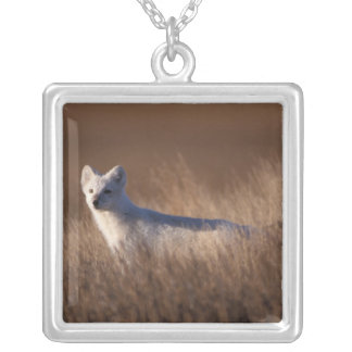 arctic fox, Alopex lagopus, on the 1002 coastal Silver Plated Necklace
