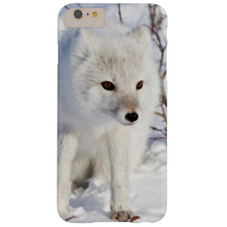 Arctic Fox , Churchill Wildlife Management Area Barely There iPhone 6 Plus Case