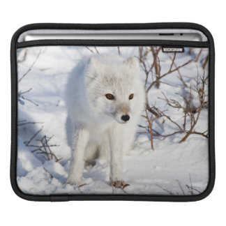 Arctic Fox , Churchill Wildlife Management Area Sleeves For iPads