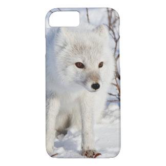 Arctic Fox , Churchill Wildlife Management Area iPhone 7 Case