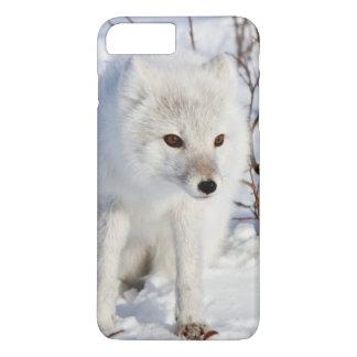 Arctic Fox , Churchill Wildlife Management Area iPhone 7 Plus Case