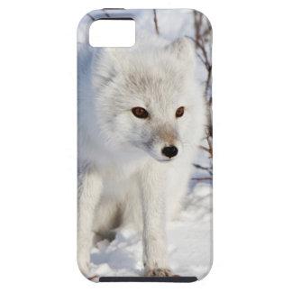 Arctic Fox , Churchill Wildlife Management Area iPhone SE/5/5s Case