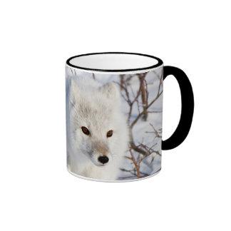 Arctic Fox , Churchill Wildlife Management Area Ringer Coffee Mug