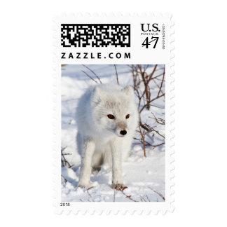 Arctic Fox , Churchill Wildlife Management Area Postage