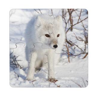 Arctic Fox , Churchill Wildlife Management Area Puzzle Coaster