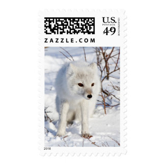 Arctic Fox , Churchill Wildlife Management Area Stamps