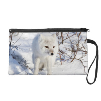 Arctic Fox , Churchill Wildlife Management Area Wristlet Purse