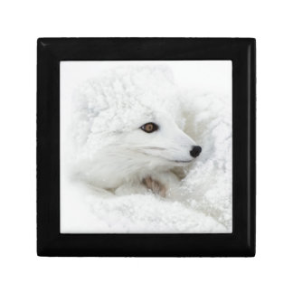 Arctic Fox curled up in winter Jewelry Box