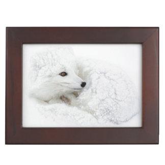 Arctic Fox curled up in winter Keepsake Box
