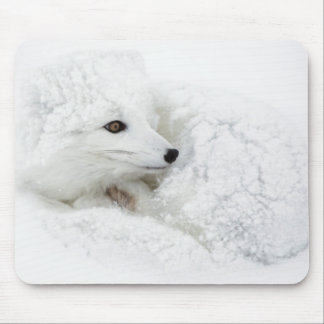 Arctic Fox curled up in winter Mouse Pad