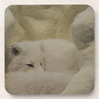 Arctic Fox Den Beverage Coaster
