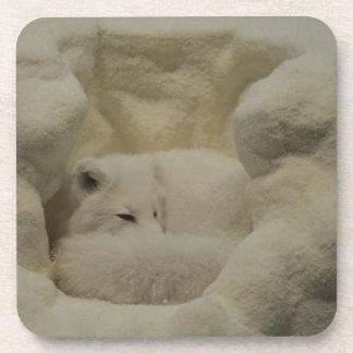 Arctic Fox Den Drink Coaster