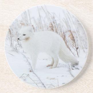 Arctic Fox Drink Coaster