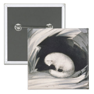 Arctic Fox, from 'Narrative of a Second Voyage in Button