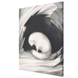 Arctic Fox, from 'Narrative of a Second Voyage in Canvas Print