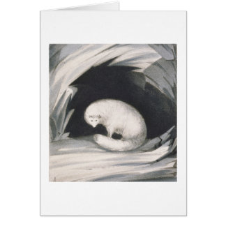 Arctic Fox, from 'Narrative of a Second Voyage in Card
