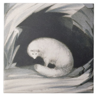 Arctic Fox, from 'Narrative of a Second Voyage in Ceramic Tile