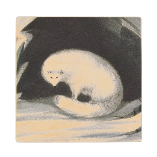 Arctic Fox, from 'Narrative of a Second Voyage in Wood Coaster