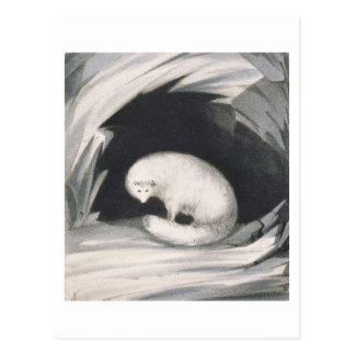 Arctic Fox, from 'Narrative of a Second Voyage in Postcard