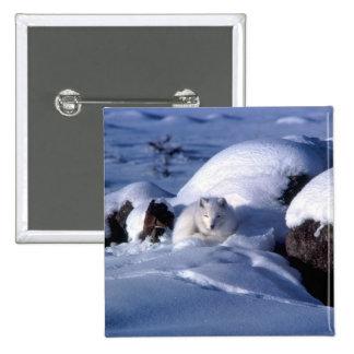 Arctic Fox in Snow Pinback Button
