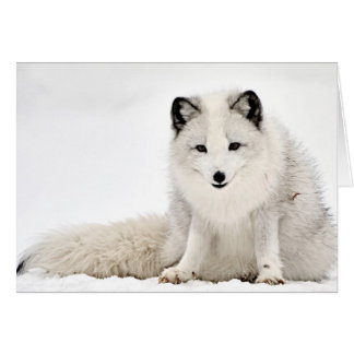 Arctic Fox in the Snow Greeting Card