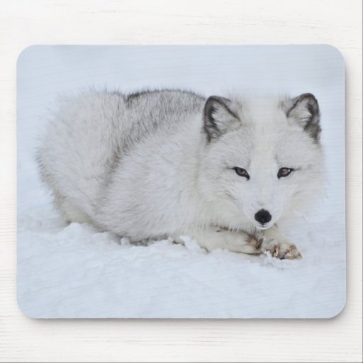 Arctic Fox in the Snow Mouse Pad