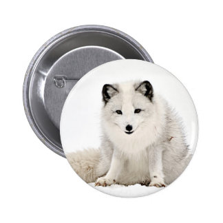 Arctic Fox in the Snow Pinback Button