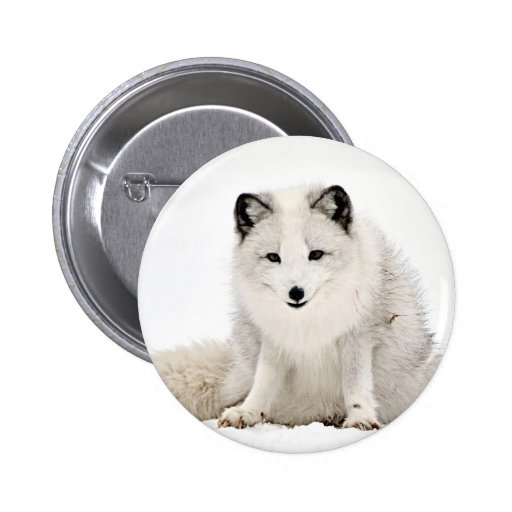 Arctic Fox in the Snow Pins