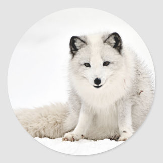 Arctic Fox in the Snow Round Stickers