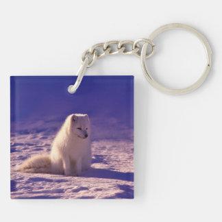 Arctic Fox Keychain
