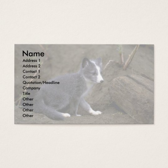 Arctic Fox kit Business Card