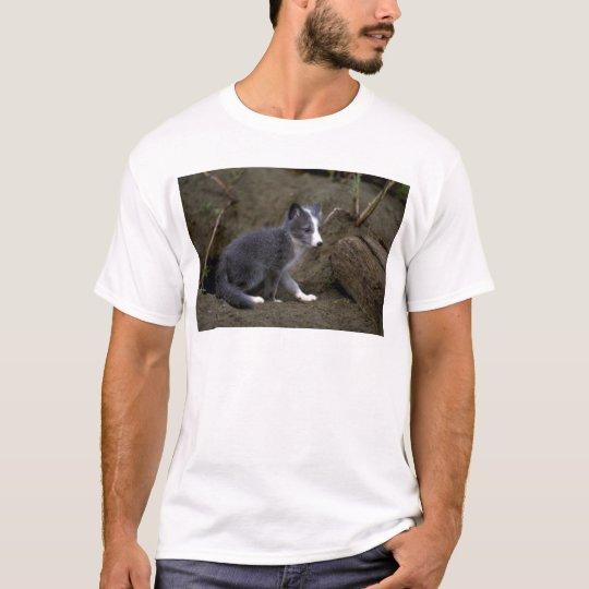 Arctic Fox kit T-Shirt